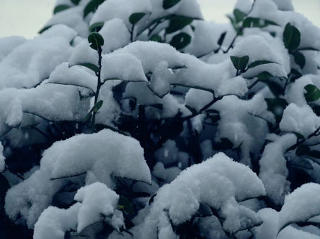Magic moments of our childhood. Slow motion video of the falling snow.