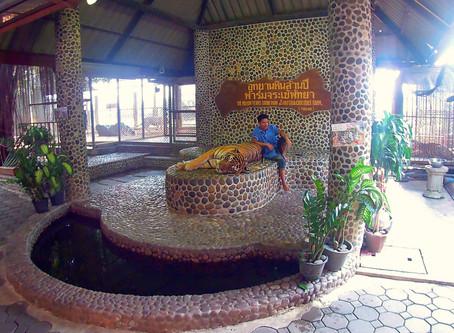 The Million Years Stone Park & Pattaya Crocodile Farm, Thailand