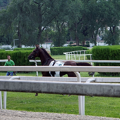 the escaped horse without rider
