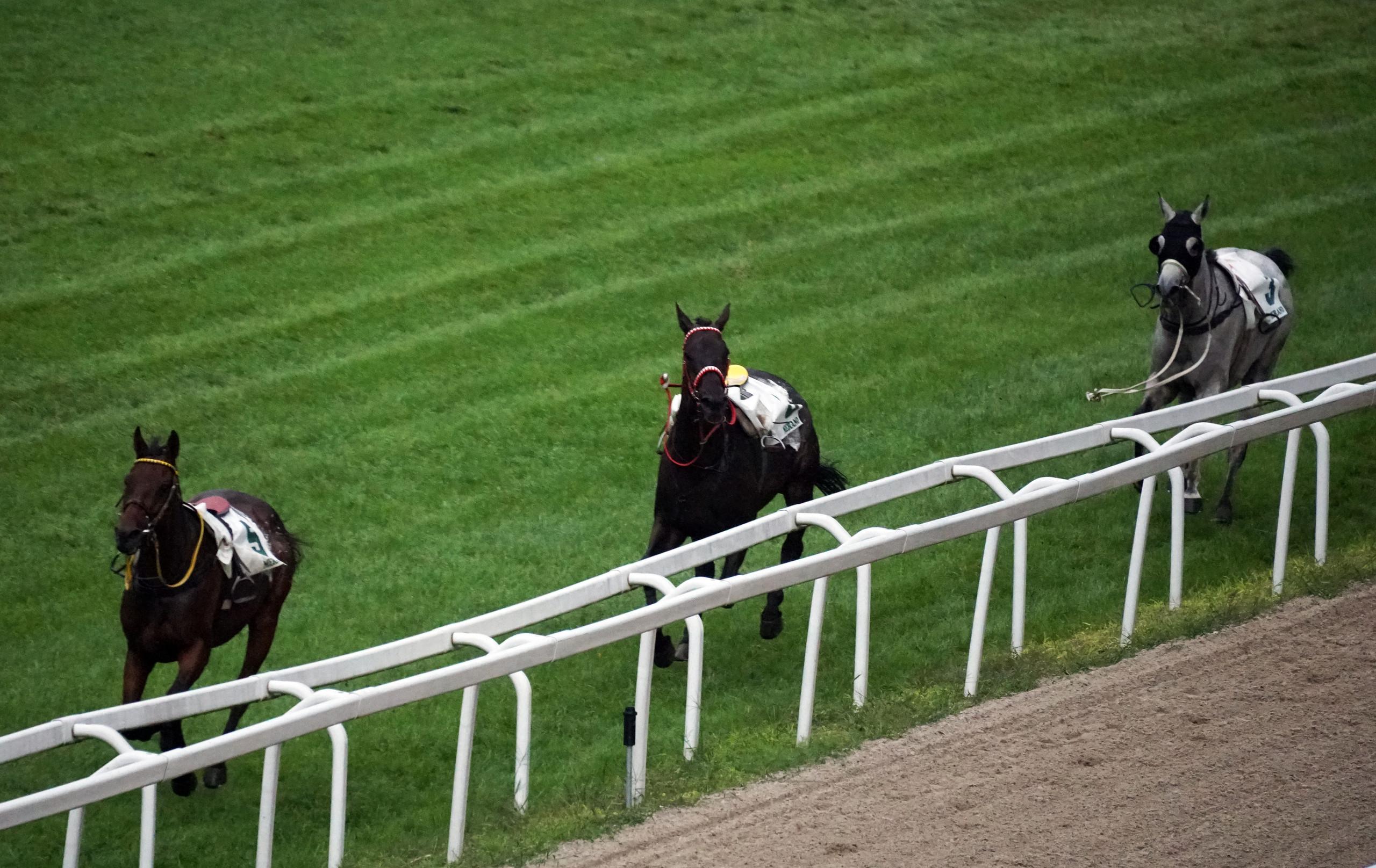 Three horses running loose