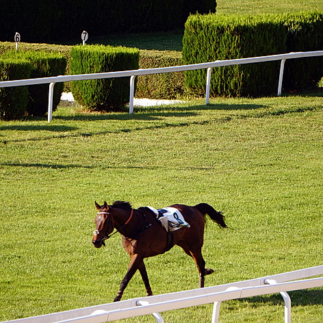 the escaped horse without a rider