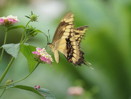 World of Orchids (and butterflies) - Raffeiner Orchid Garden.