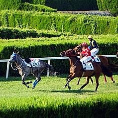 Horse race in Merano, BZ, Italy in 2019