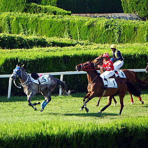 the horse without a rider leading the race