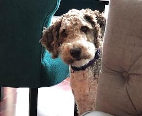 Bella in-home boarding