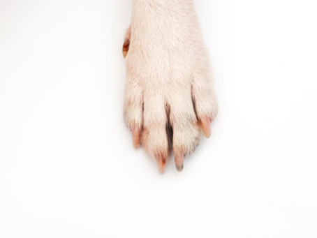 Everything you need to know about giving your dog a pawdicure