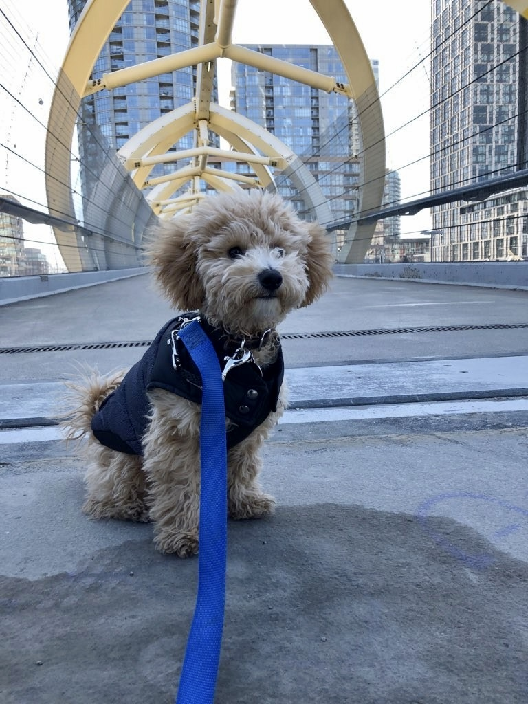 "Brody ""The City Slicker"""