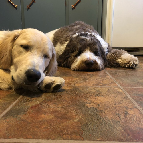 In-home boarding dogs sleeping