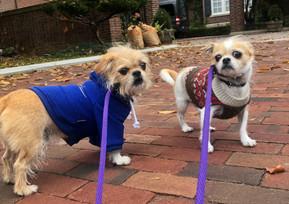 Rosedale dogs