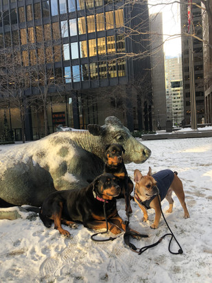 Doggies in the Financial District