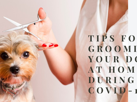 Dog grooming at home during COVID-19