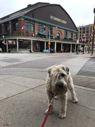 Jasper with his St. Lawrence Market dog walker