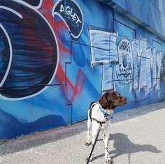 Goose dog walking in Corktown