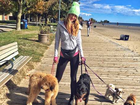 10 Things to look for when hiring a Dog Walker in Toronto