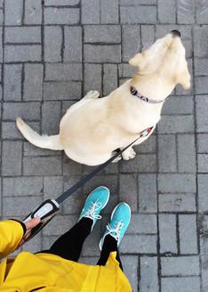 Yorkville dog walking