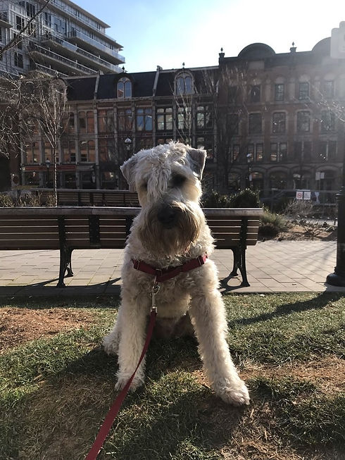 St Lawrence Market Dog Walking