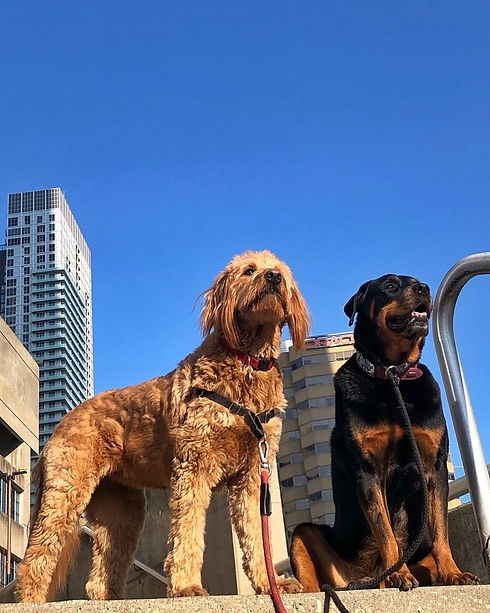 Entertainment district dogs walking