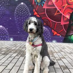 Penny in Corktown