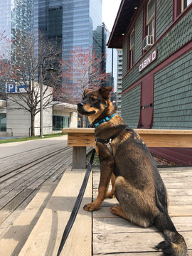 Alfred near Cityplace