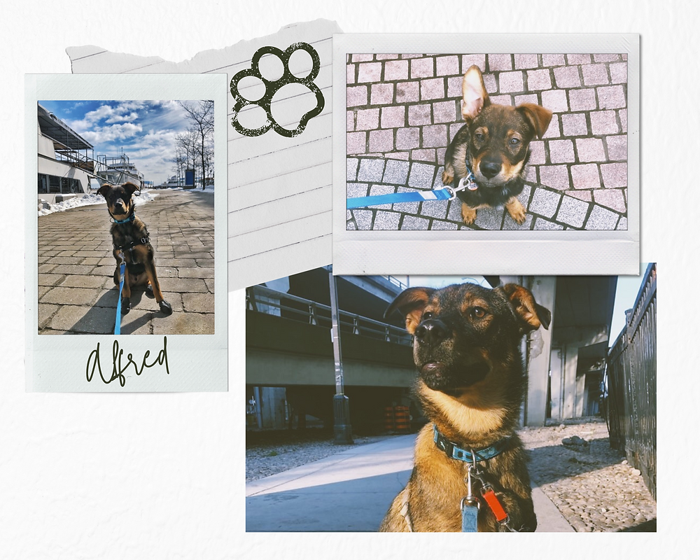 Toronto Harbourfront Dogs