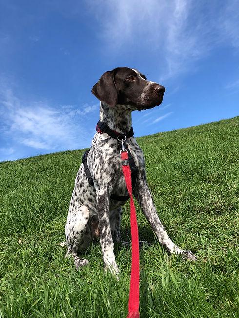 Queen west dog walking