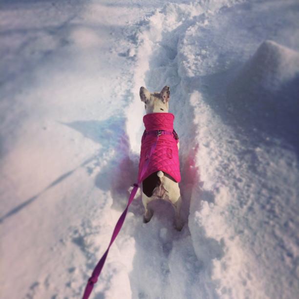 Summerhill dog walkers