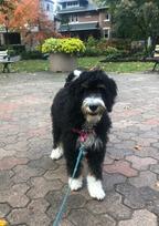 Puppy in Rosedale