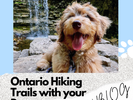 Ontario Hiking Trails with your Dog