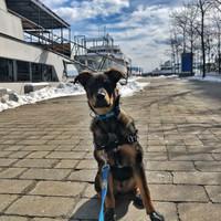 Toronto Harbourfront dog walking