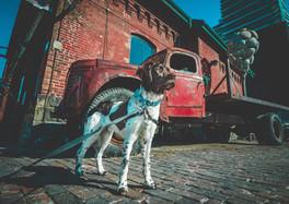 Distillery District dog