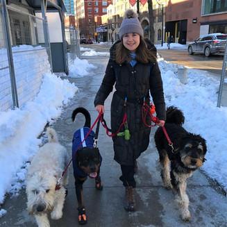 St. Larence Market dog walking