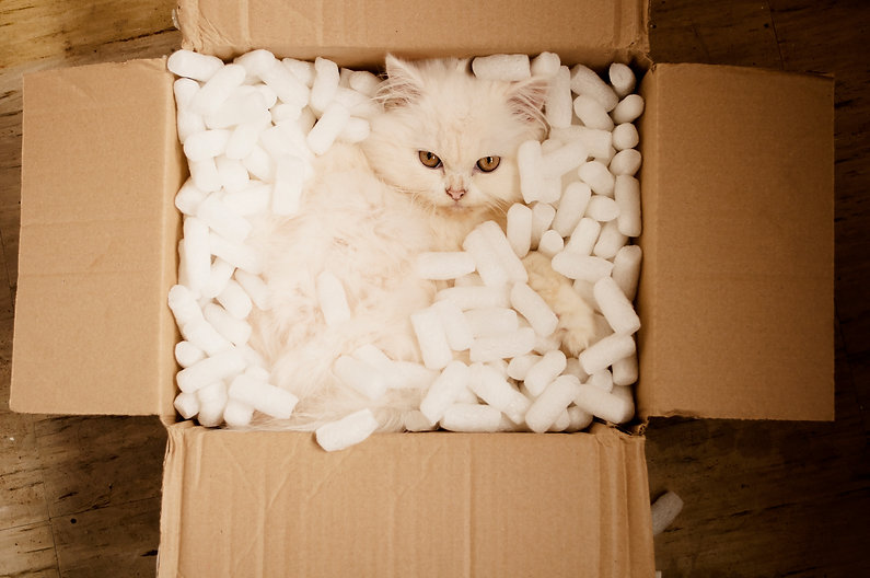 cat in a box-The smallest feline is a masterpiece""