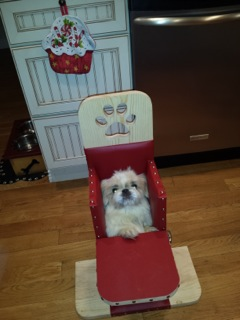 Bella in her Bailey Chair