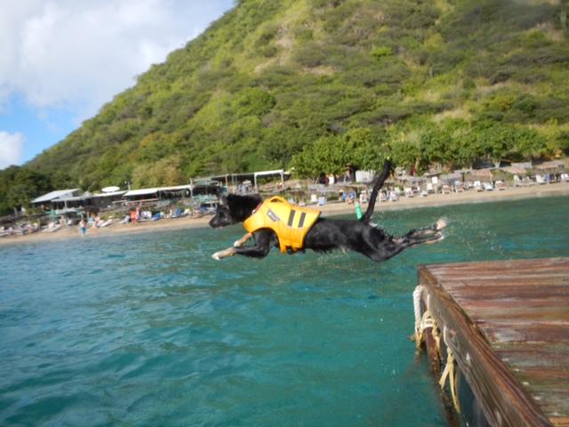 Scuba the Scuba Diving Dog