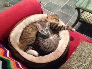Intimate Mango & Rooney