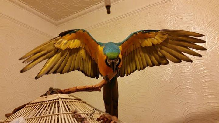 What a Precious Bird