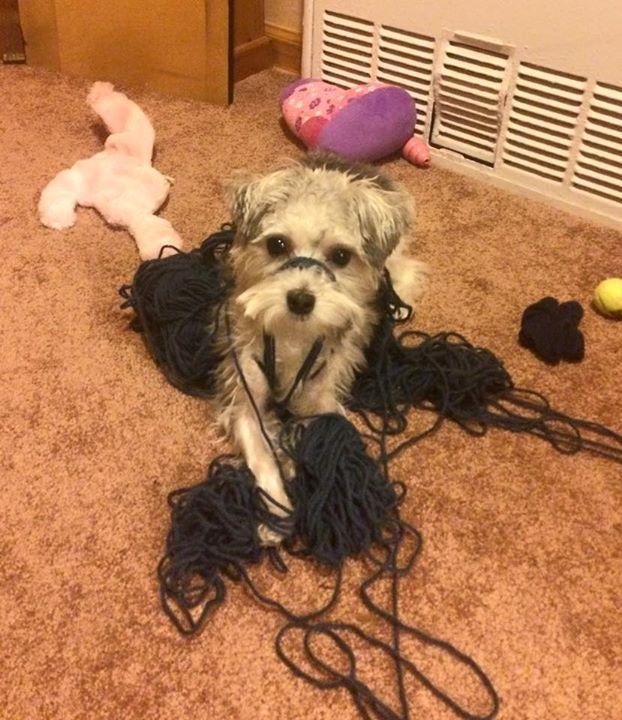 Skylar's First Knitting Lesson