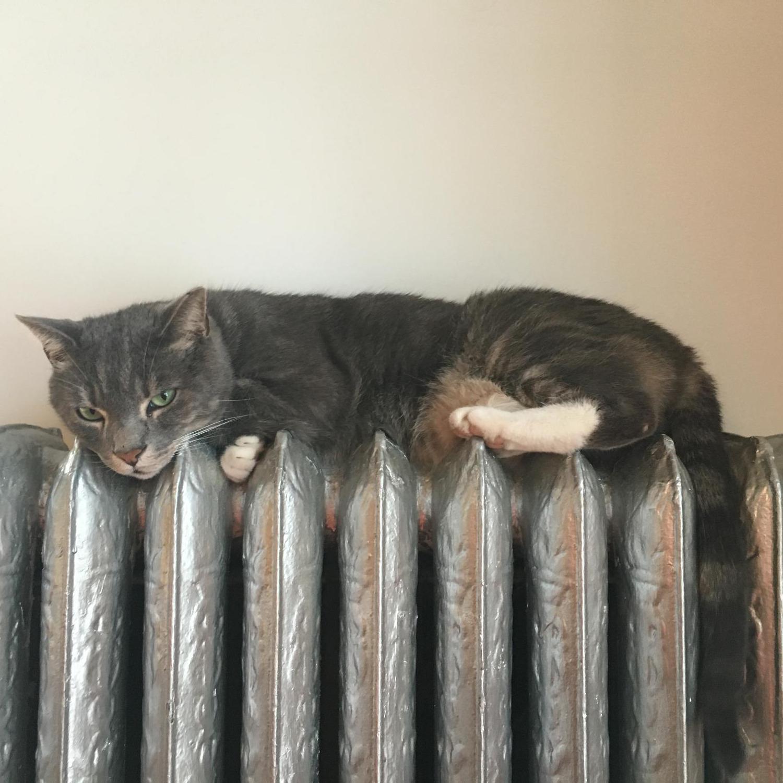 Niko on His Warming Rack