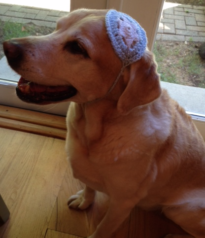 Maggie Rose's Bark Mitzvah