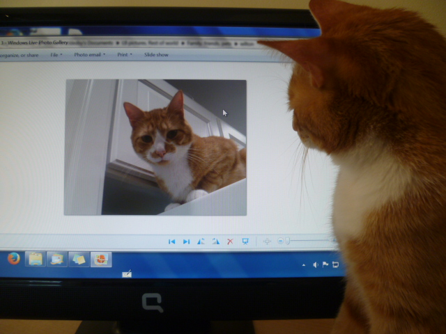 Wilton-a Computer Savy Cat