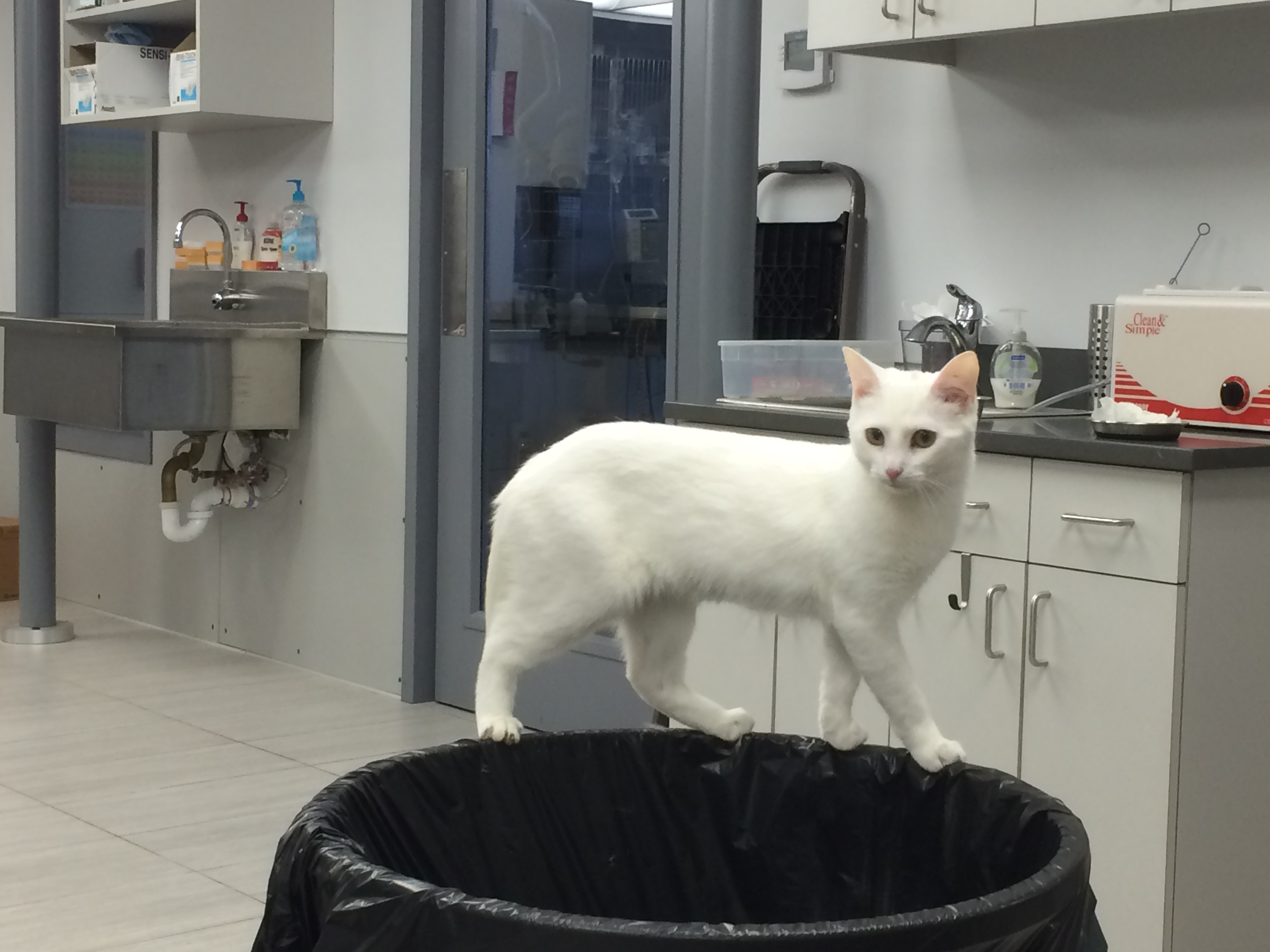 Perleen is No Garbage Cat