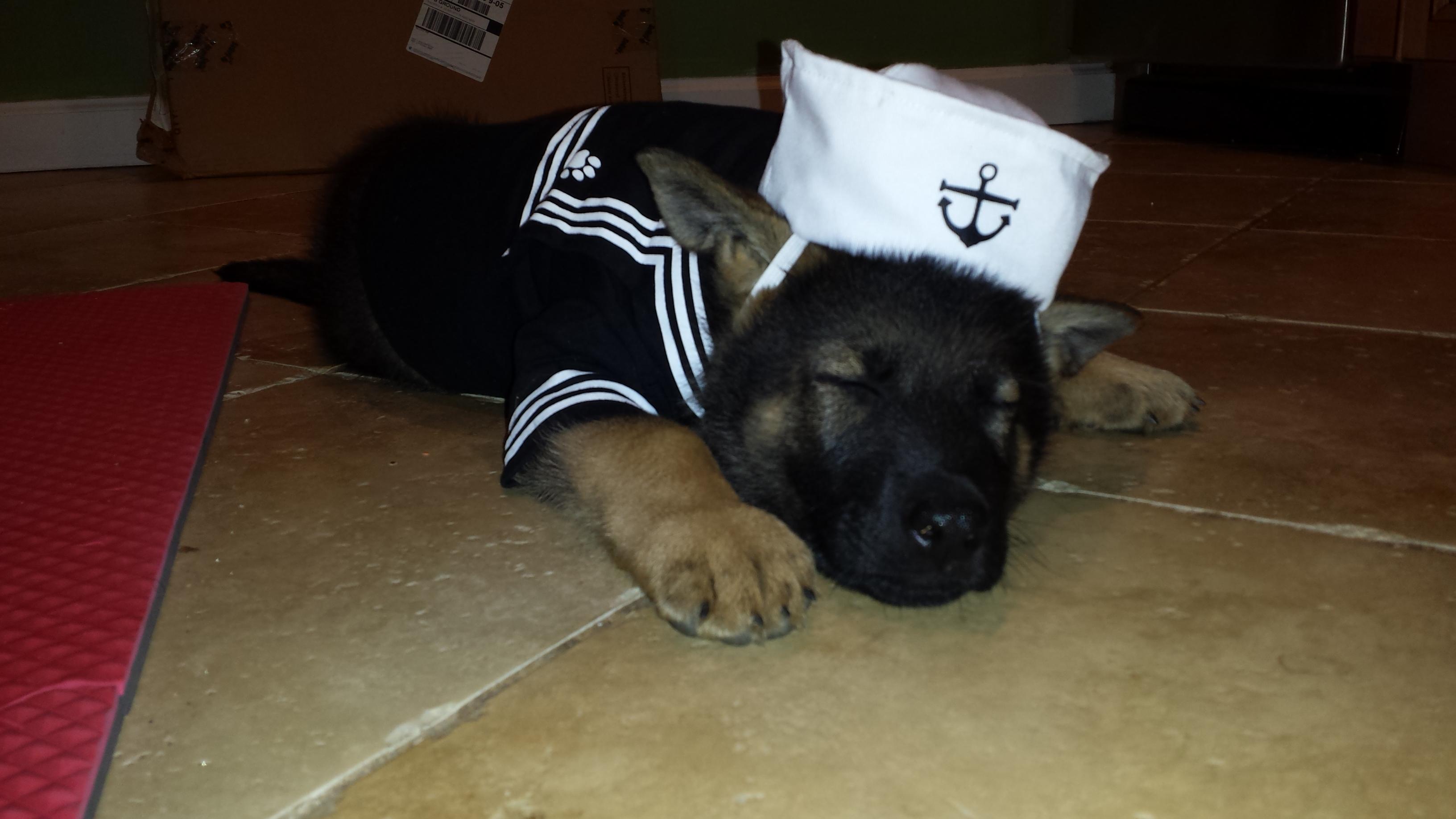 Eugene, the Tired Sailor