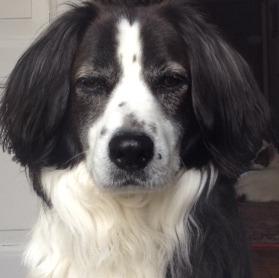 Eddie, the Handsome Hunk