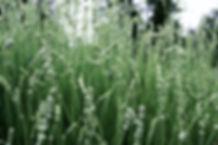 DSC04067_edit.jpg