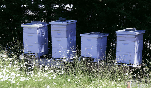 Resident Bees