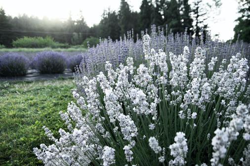 Specimen Garden