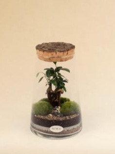 Erlen 1 Terrarium