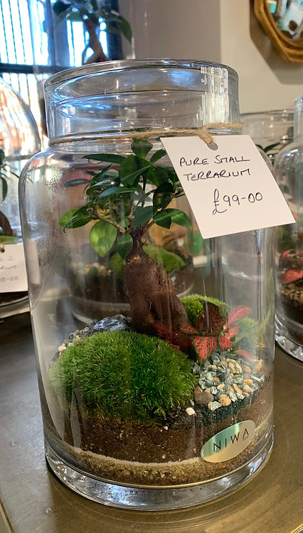 Pure Small Terrarium