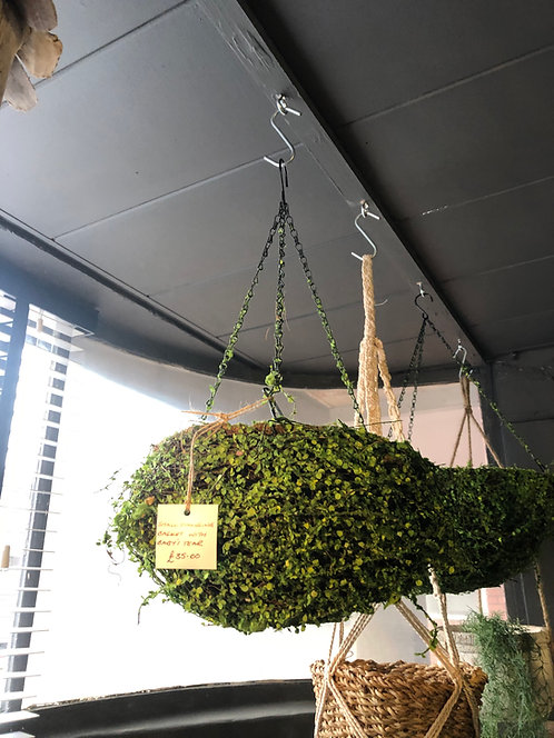 Small Hanging Basket with Baby's Tear