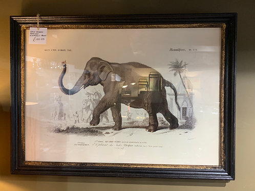 Gold Edged Framed Elephant Print